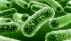 Симптомы различных бактериальных инфекций у детей