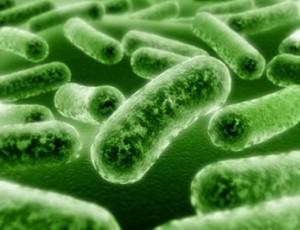 Бактериальные инфекции у детей