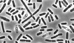 Человек и бактериальные заболевания: что нужно знать