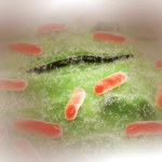 Эшерихиоз: причины, симптомы и лечение эшерихиоза