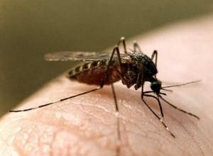 Малярия – как самостоятельно лечить