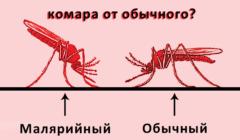 Малярия: причины, симптомы и лечение у взрослых