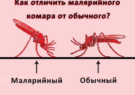 кишечные паразиты у человека симптомы диагностика