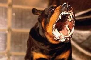 Собака больная бешенством