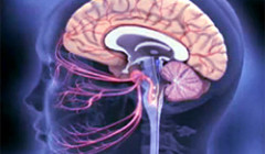 Инфекции головного мозга