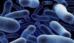 Какие болезни вызывают бактерии?