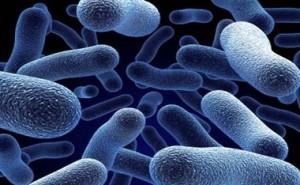Бактериальные инфекции человека