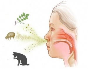 Причины аллергической формы фарингита