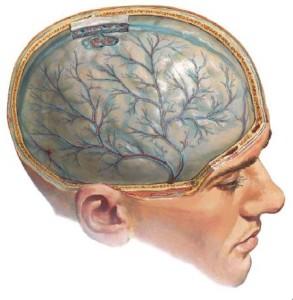 Реактивный менингит – как правильно лечить