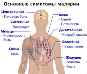 Основные признаки малярии