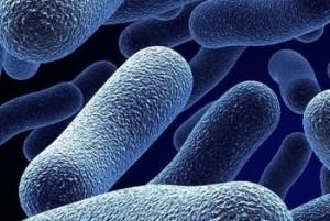 Бактерии вызывающие кольпит