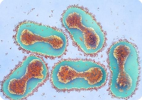 Вирус натуральной оспы